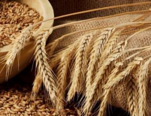 Турция все-таки остановила импорт российского зерна