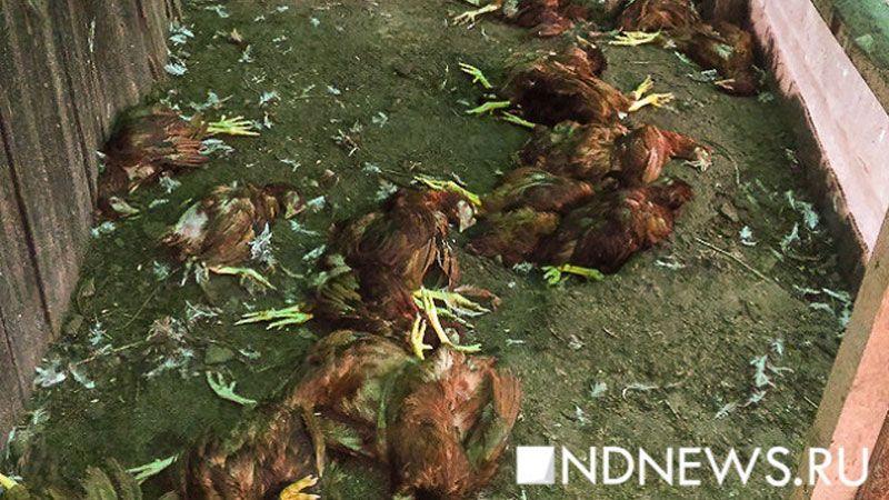 Диких птиц проверяли наналичие гриппа впериод весенней охоты вПодмосковье
