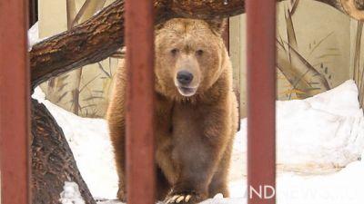 ВСвердловской области медведь спровоцировал ДТП