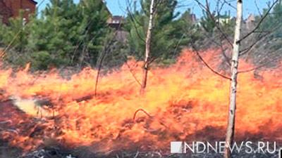ВСибири площадь лесных пожаров удвоилась засутки
