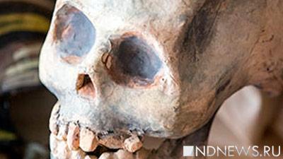 Разделение нарасы случилось неменее 260 тыс. лет назад— Ученые