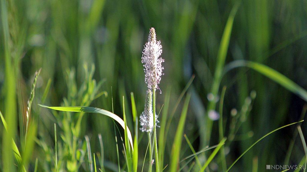 Врио губернатора Севастополя подарил подчинённому газонокосилку ипредложил лично заняться покосом травы
