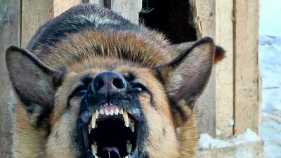 ВЧелябинской области осудили владельца собак, насмерть загрызших 7-летнего ребенка