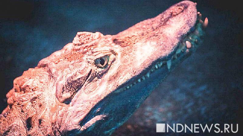 Мэр мексиканского города женился накрокодиле