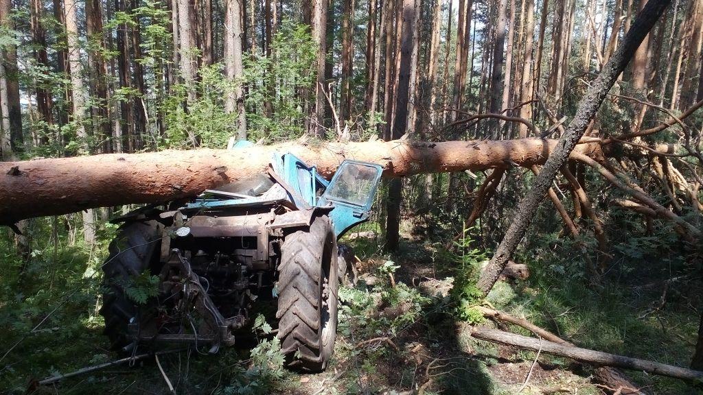 ВЧелябинской области под упавшим деревом умер  41-летний тракторист