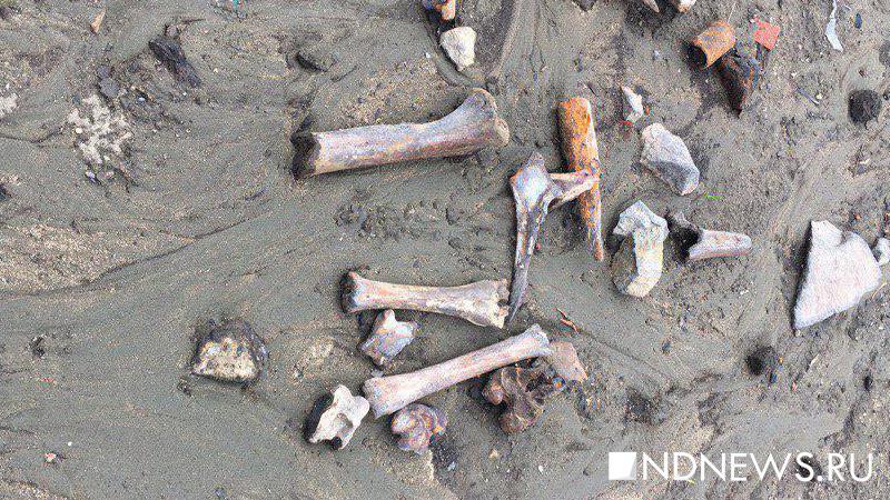 Впруду Екатеринбурга обнаружили человеческие кости
