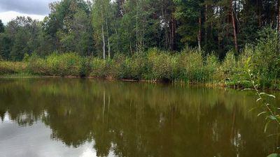 ВМиассе потонул шестилетний ребенок