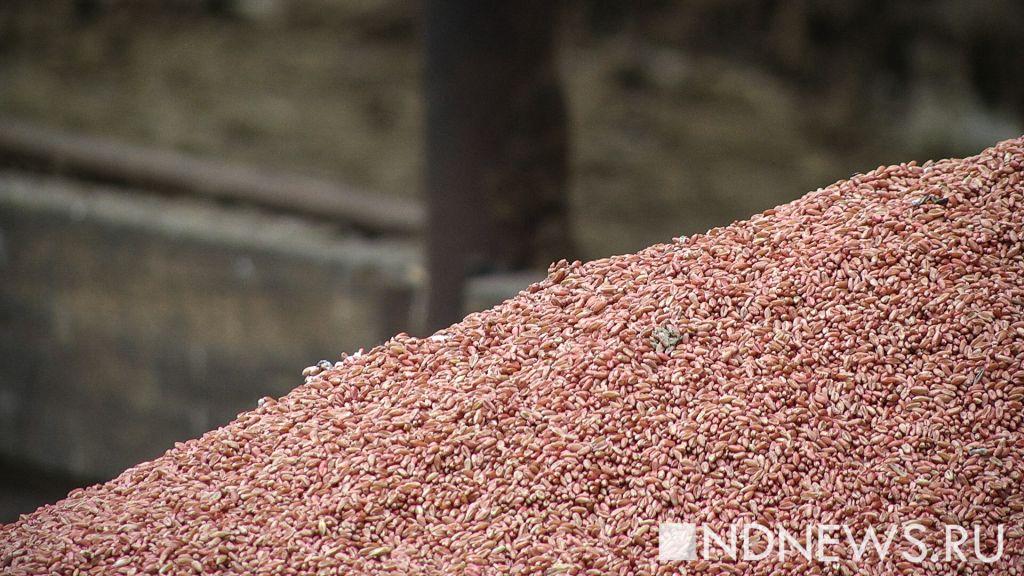 Хлеборобы Курганской области собрали 2 млн тзерна