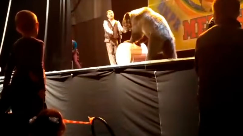 Медведь напал надрессировщика вСыктывкаре наглазах удетей