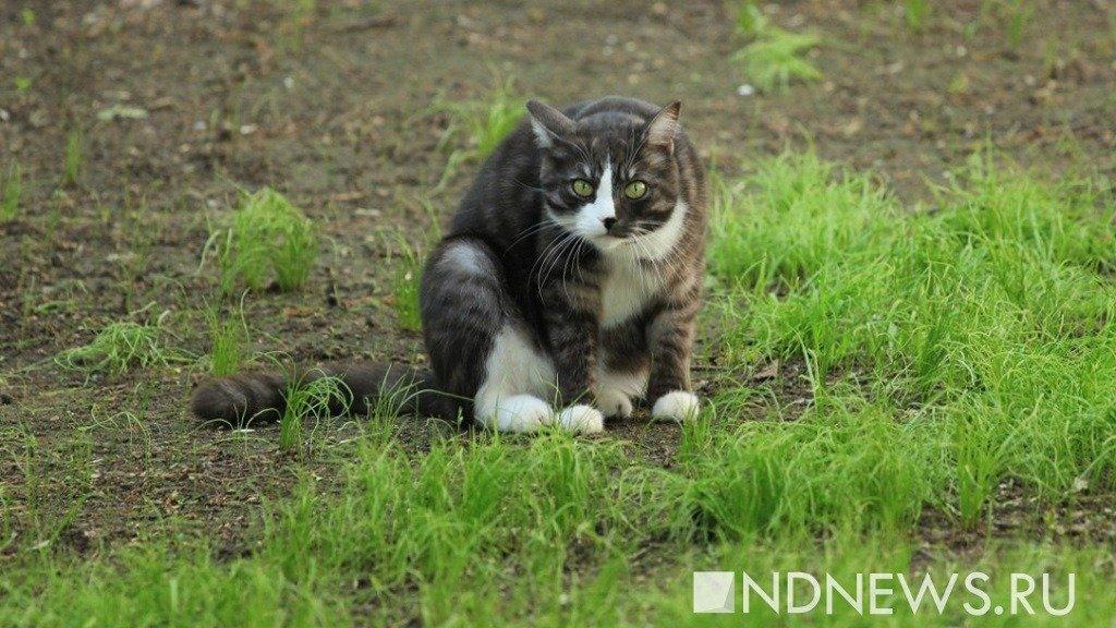 Кошки всостоянии спасти новорожденных отхронической болезни— врачи