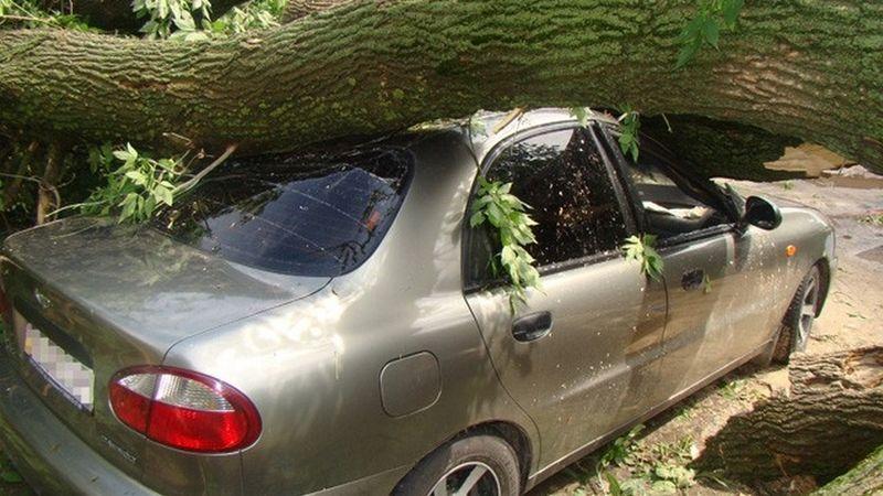 Коммунальщики Челябинска заплатят автолюбителю заупавшее намашину дерево