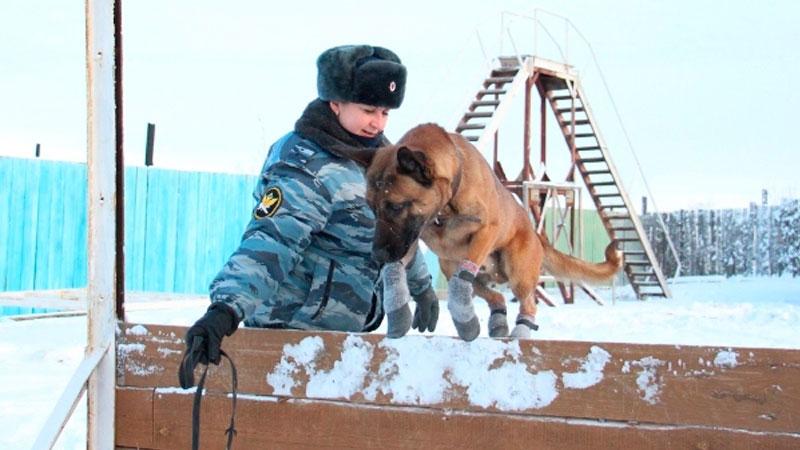 Корейские собаки-клоны будут охранять заключенных вЯкутии
