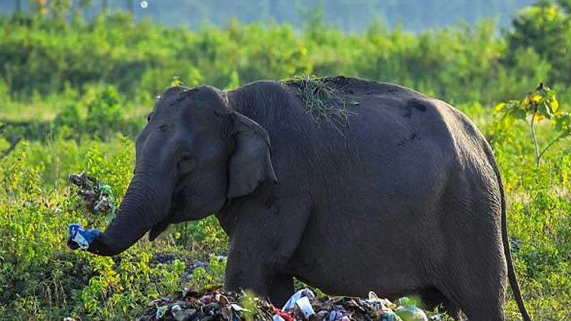 ВТаиланде житель россии пострадал в итоге нападения слона