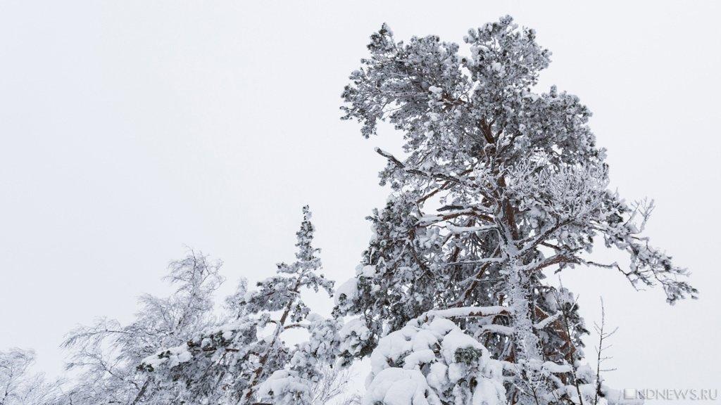 Из-за сильных морозов отменены занятия вшколах Челябинской области