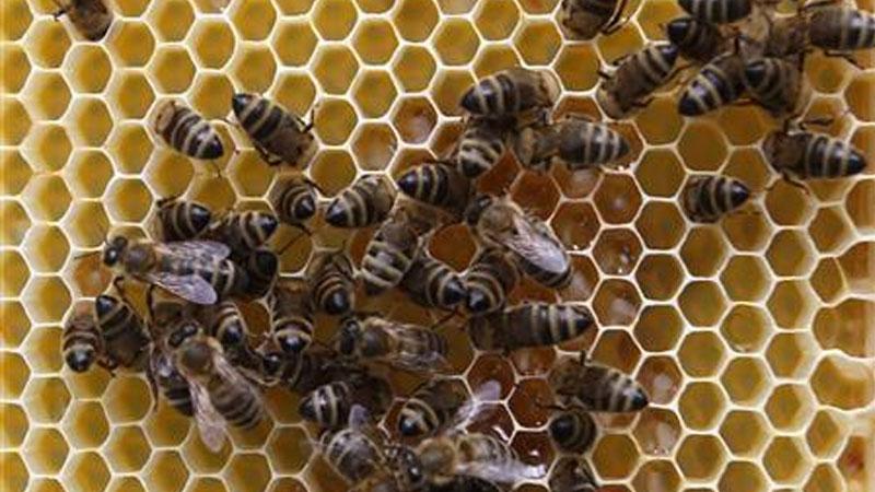 ВКалифорнии неизвестные уничтожили десятки тыс. привезенных из Российской Федерации пчел