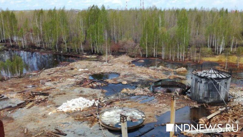 Ученые изсоедененных штатов предсказали наступление повсеместной экологической катастрофы