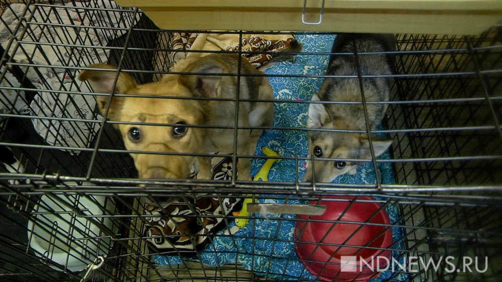 ВМурманске разгромили приют для животных, разыскиваются 30 собак