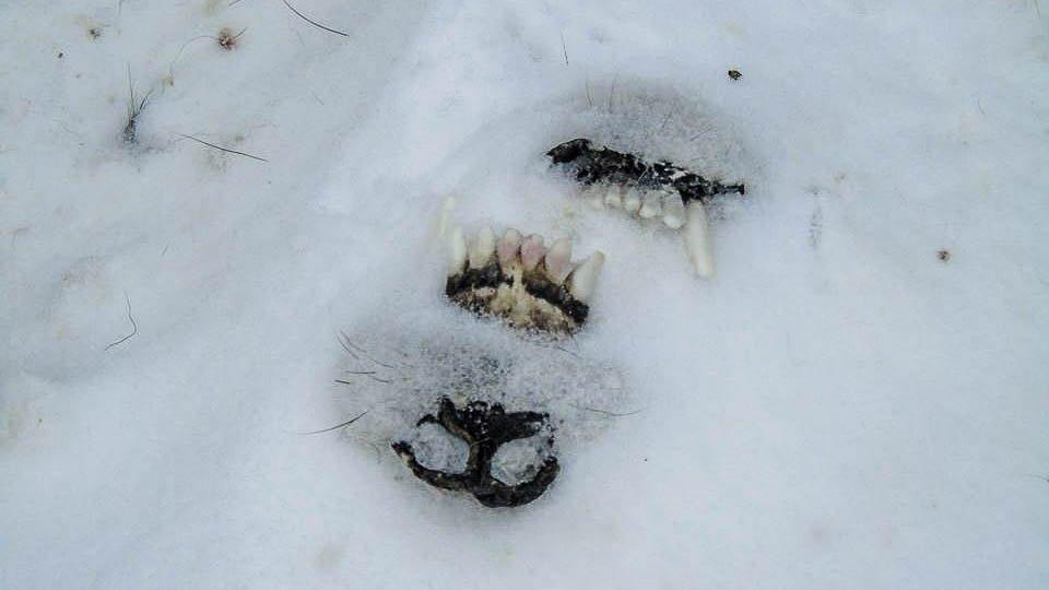 Свалку убитых собак обнаружили под Нижним Тагилом