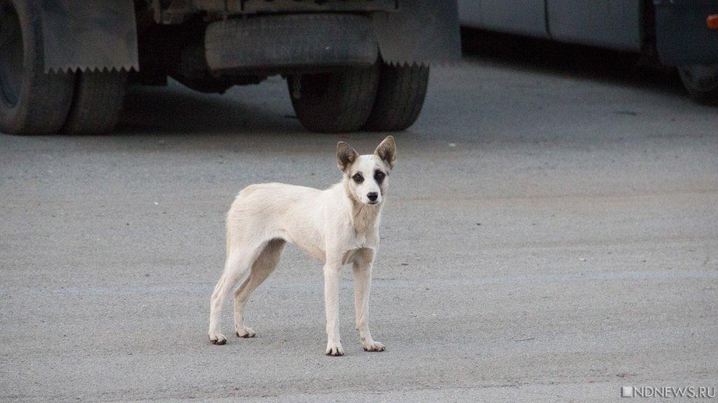 Наюжноуральца завели уголовное дело завыброшенных намороз новорожденных щенков