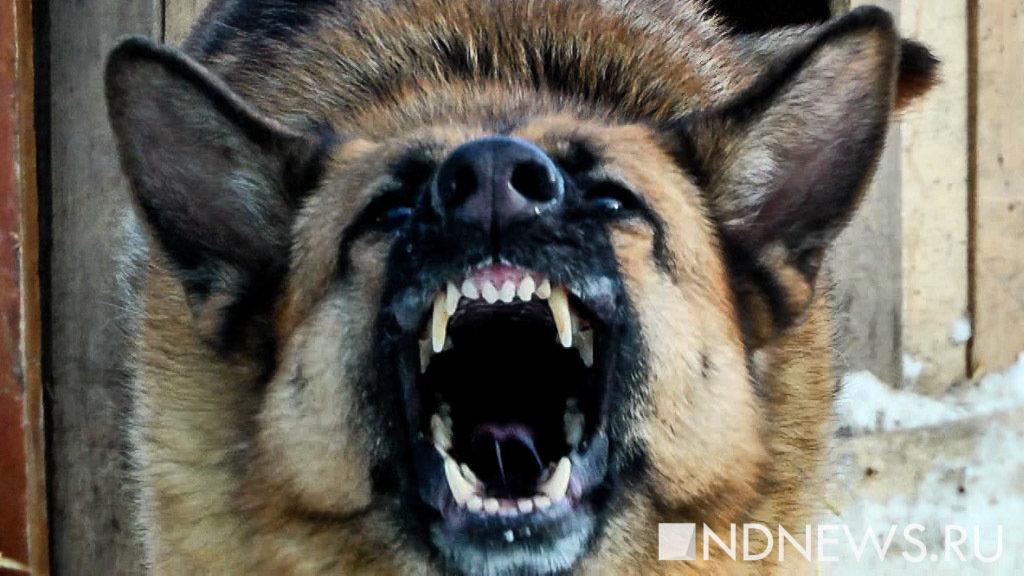 ВСоветском зарастерзанного сворой сторожа ответит владелец собак