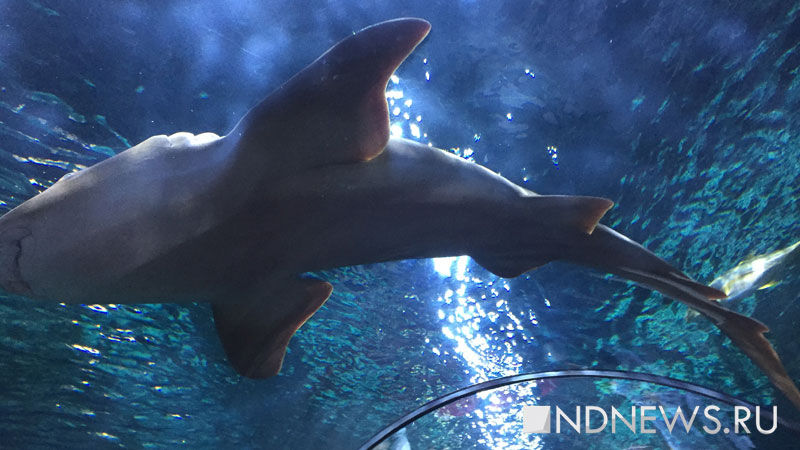 В Таиланде из-за нападения акулы на туриста закрыли пляж