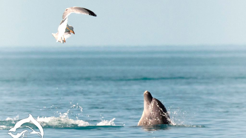 Постпред Порошенко: Крымские дельфины отказались нарушить присягу Украине и свели счеты с жизнью