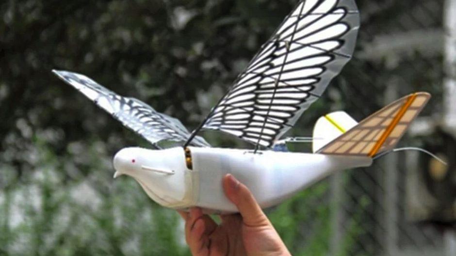 В КНР создали дроны-разведчики неотличимые отнастоящих голубей