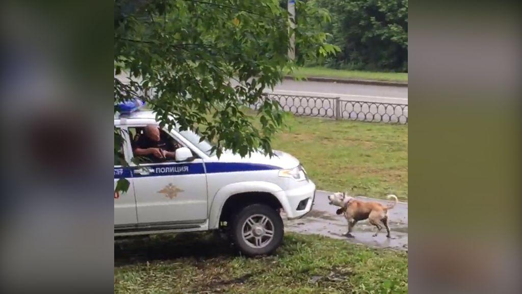 Милиции довелось убить агрессивного пса, непускавшего купавшему владельцу