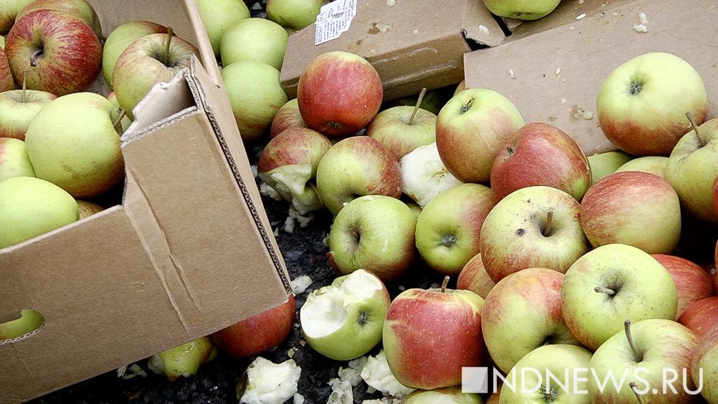 В Польше в холодильнике с фруктами нашли трупы двух украинцев