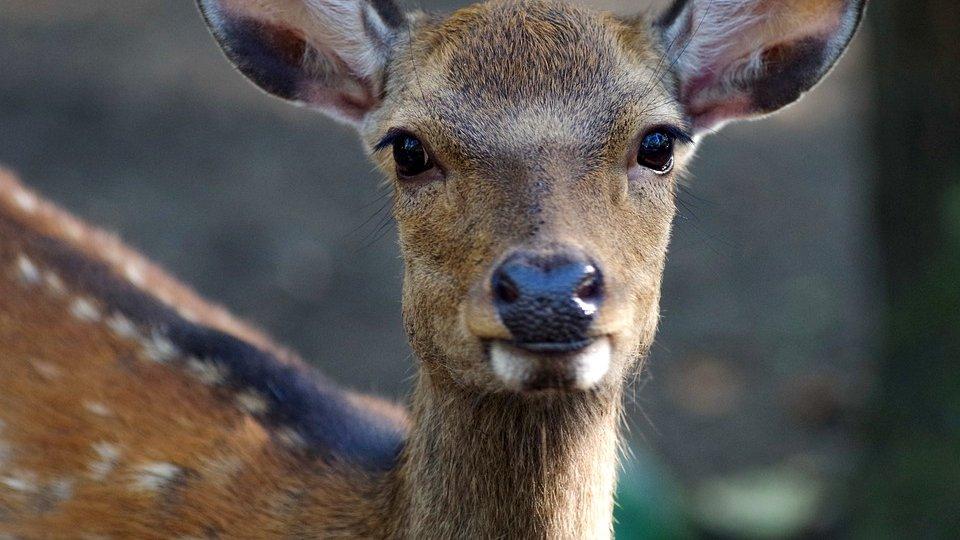 В Тюменской области за сутки задержали сразу четырех браконьеров, которые охотились на косуль