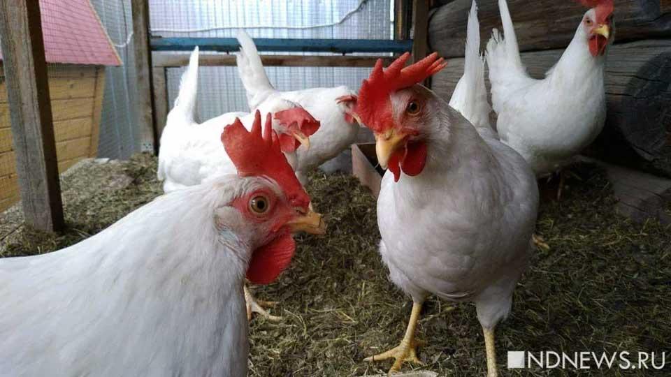 Европа заблокировала ввоз мяса птицы из Украины