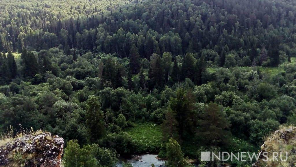 С опасным вредителем, пожирающим леса, пока бороться не будут – его слишком мало