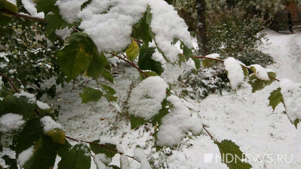 В Тюменской области предстоящей ночью ожидаются заморозки