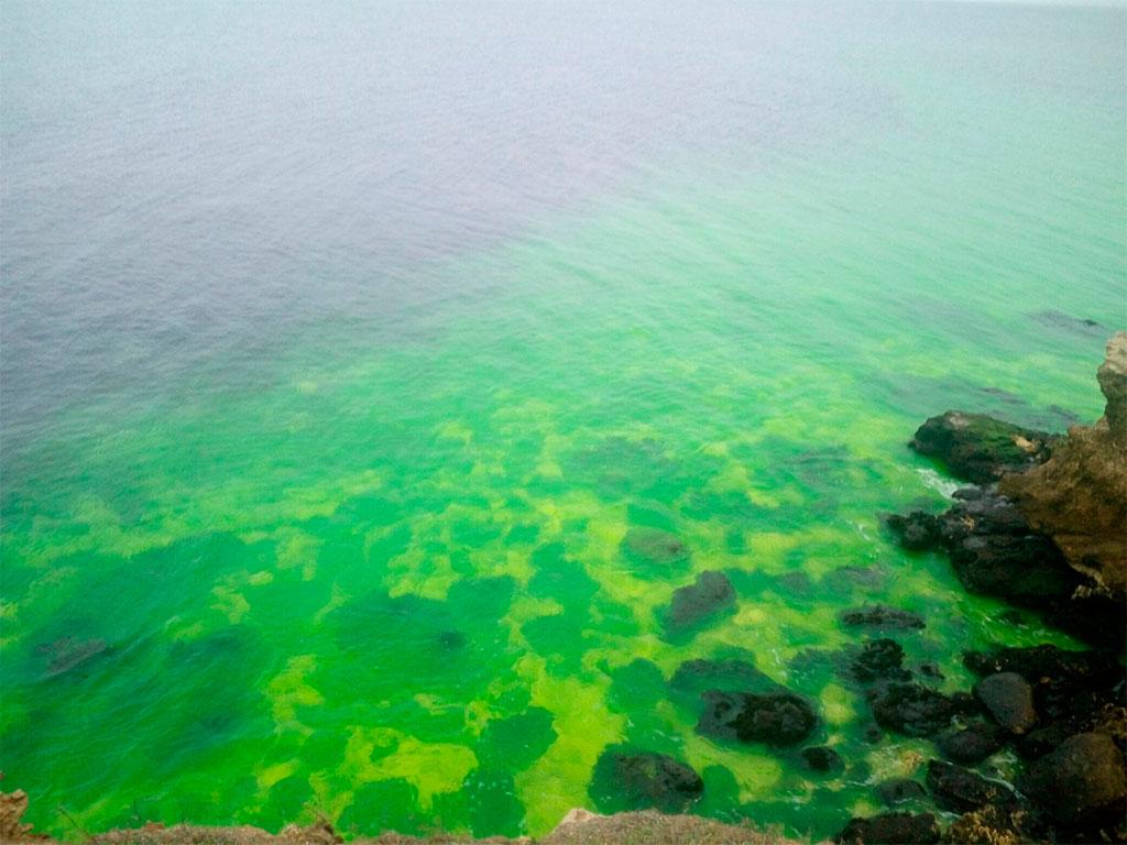 ВСевастополе неизвестный окрасил море вярко-зеленый цвет
