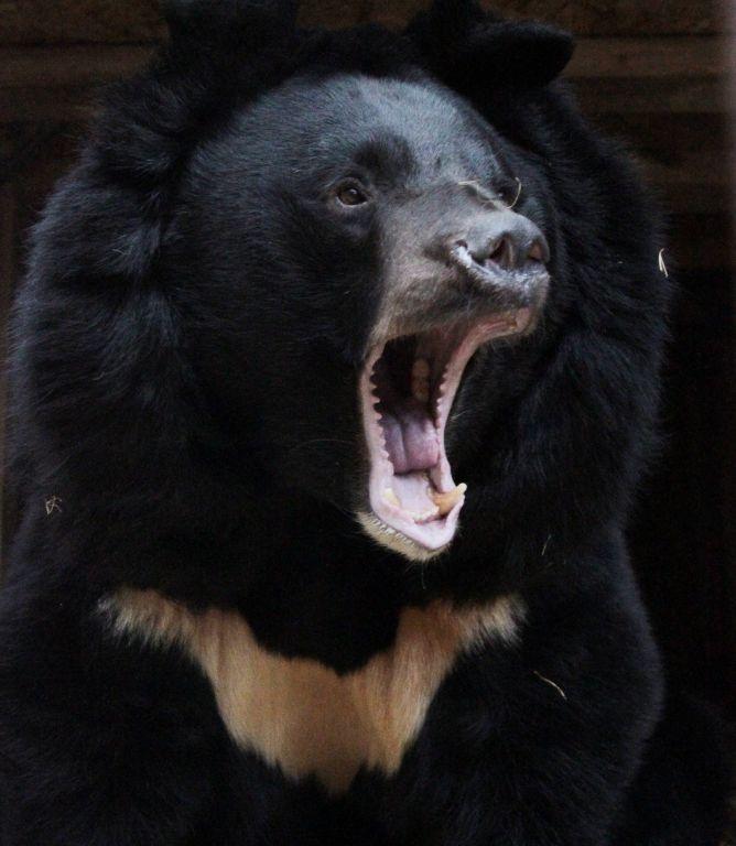 Медведи втамбовском зоопарке неспешат просыпаться
