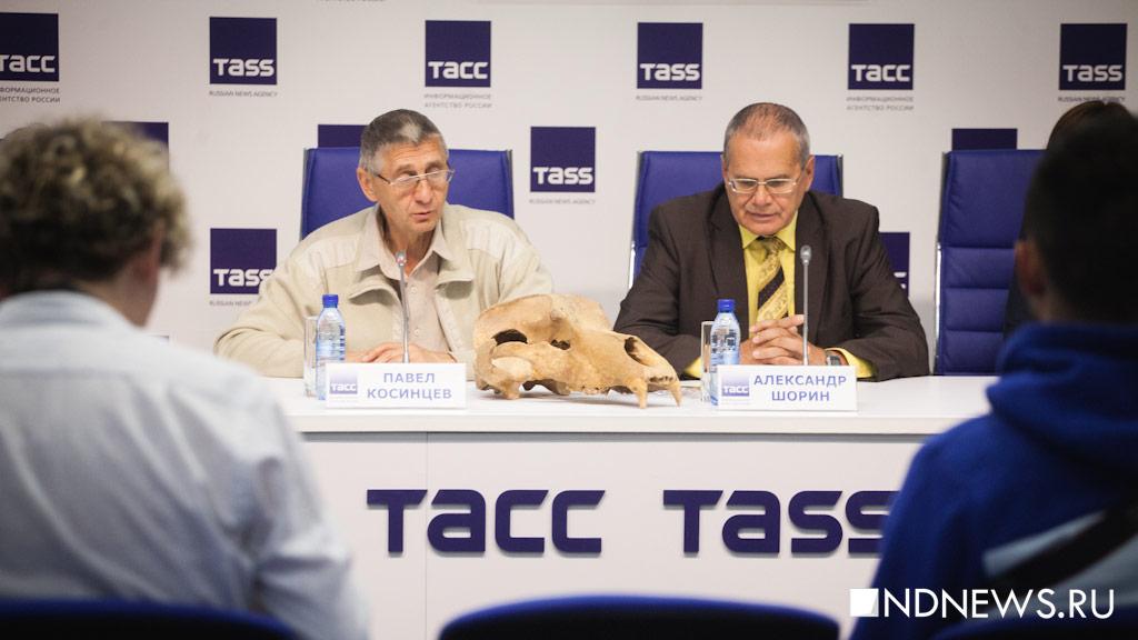 ВКоми обнаружили останки старинных пещерных медведей