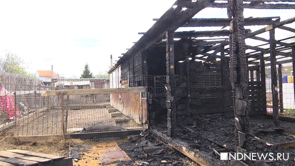 Выносили наруках. НаУрале собаки живьем сгорели вприюте для животных