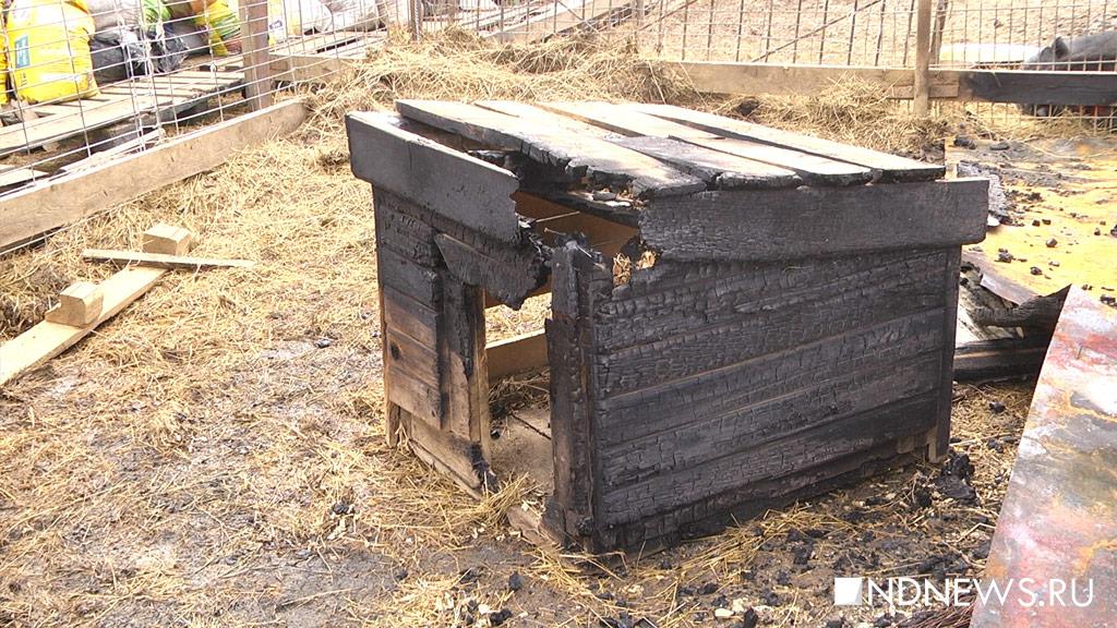 ВКурортном районе сгорел приют для собак, погибли несколько животных