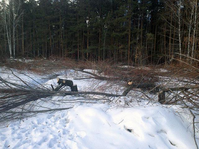 Неизвестные вырубили всквере неменее 50 деревьев