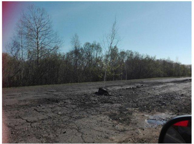 ВОмской области в уличных ямах неизвестные начали сажать деревья