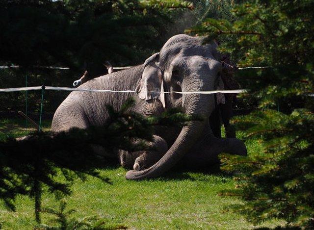Новый Регион По Петербургу гуляет слон