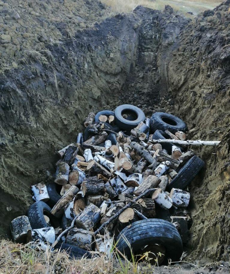 На Урале действует очаг африканской чумы свиней. В лесу нашли 37 мертвых животных (ФОТО)