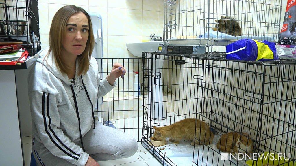 «Там бабушка-инвалид ходила на костылях во время бомбежки кормить собак», – уральские волонтеры о Луганских зоозащитниках (ФОТО, ВИДЕО)