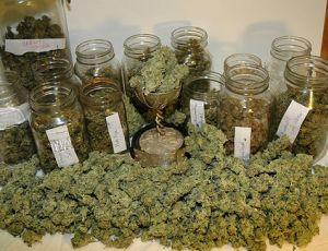 Выращивание марихуаны для себя конопля дикая прет