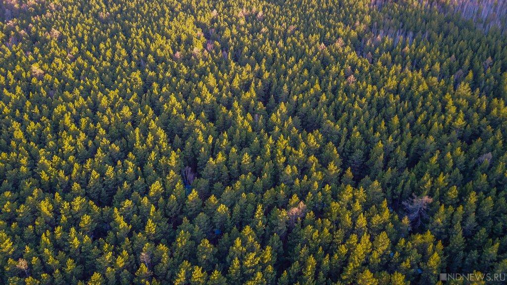 Минприроды объяснило рубку защитных лесов на продажу китайцам: леса на Урале много