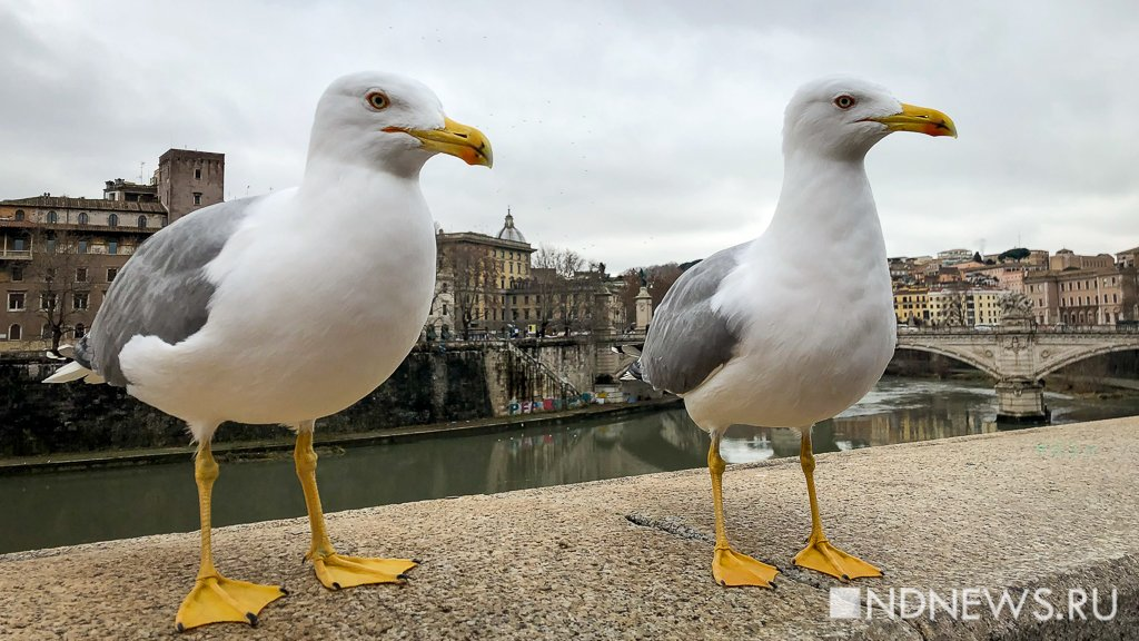 Орнитологи предложили меры по борьбе с птицами вблизи аэропортов