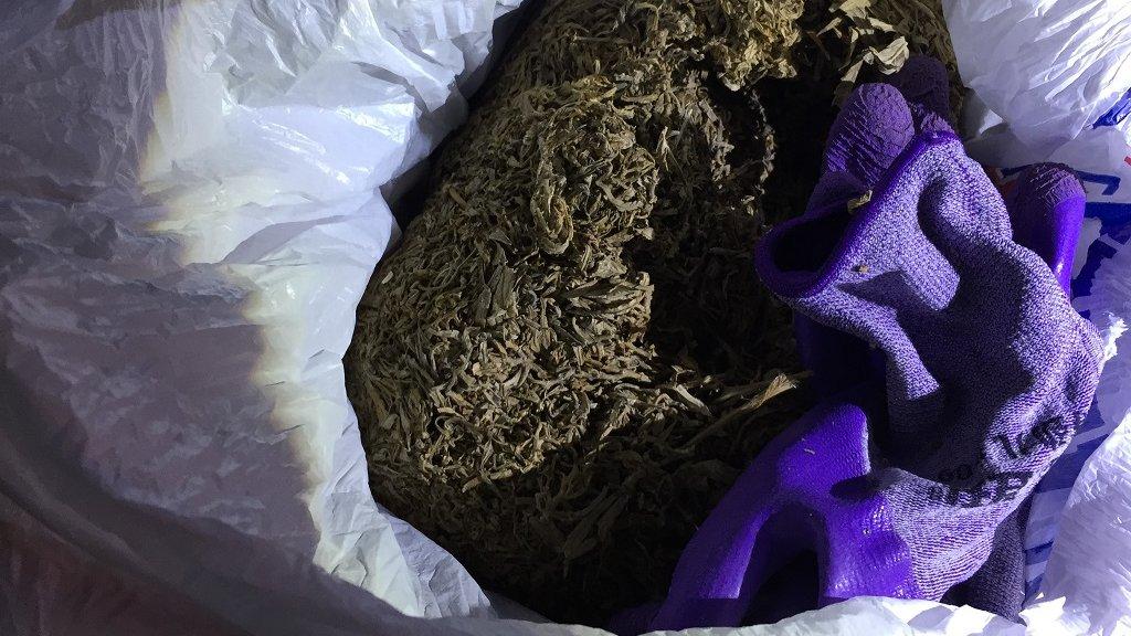 Поймали с коноплей которую нарвал продажа конопляных семян украина