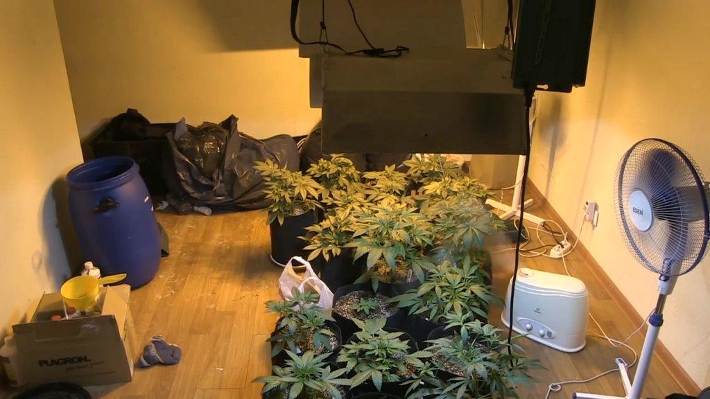 Марихуана в екб изготовление марихуаны